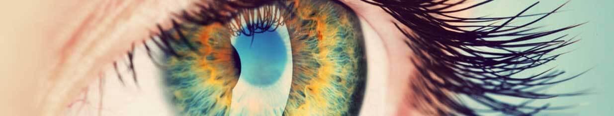 Comment fonctionne l'oeil?
